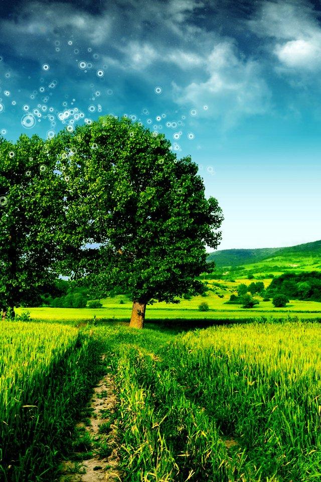 壁纸 草原 成片种植 风景 植物 种植基地 桌面 640_960 竖版 竖屏