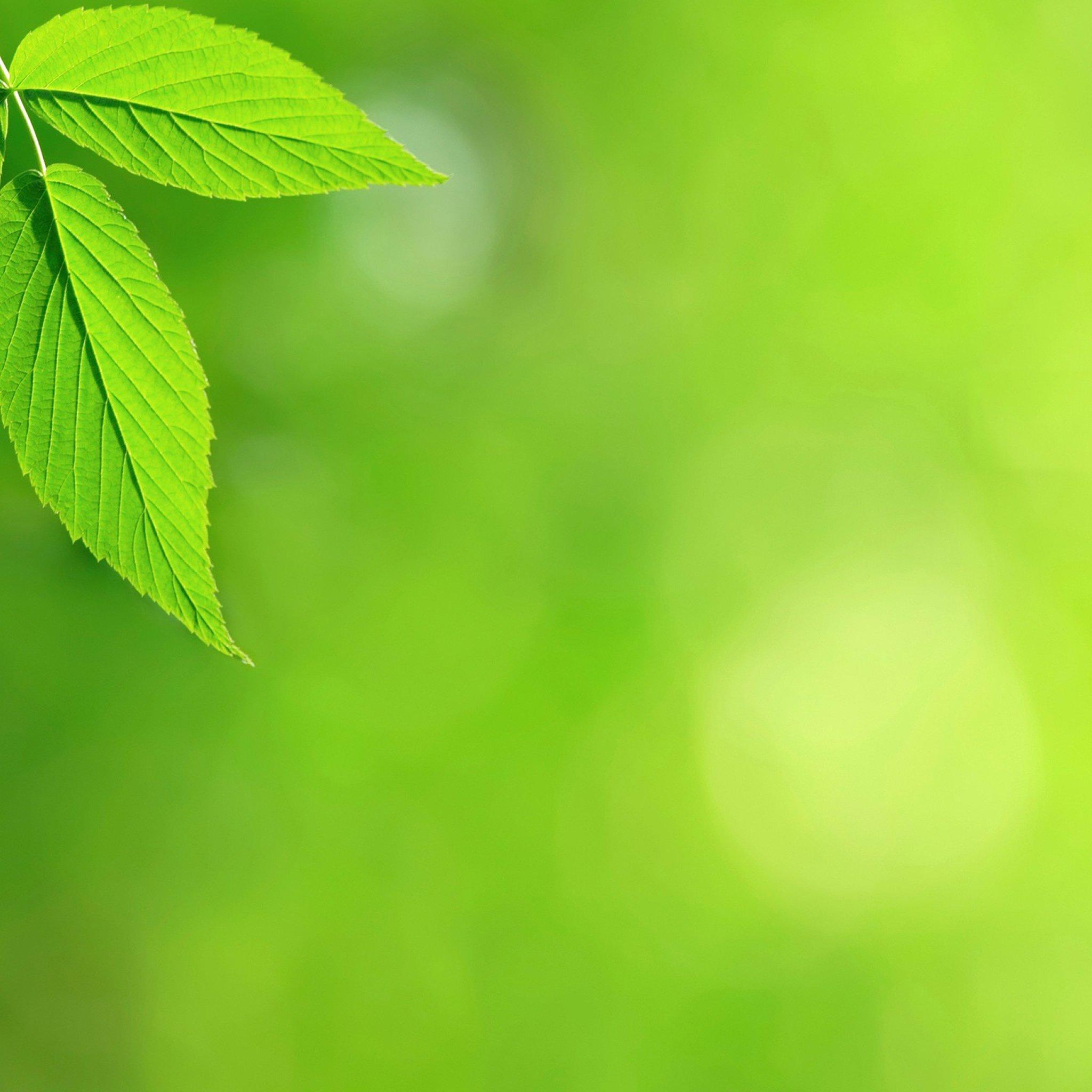 背景 壁纸 绿色 绿叶 树叶 植物 桌面 2048_2048