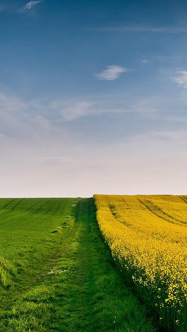 壁纸 草原 成片种植 风景 植物 种植基地 桌面 640_1136 竖版 竖屏