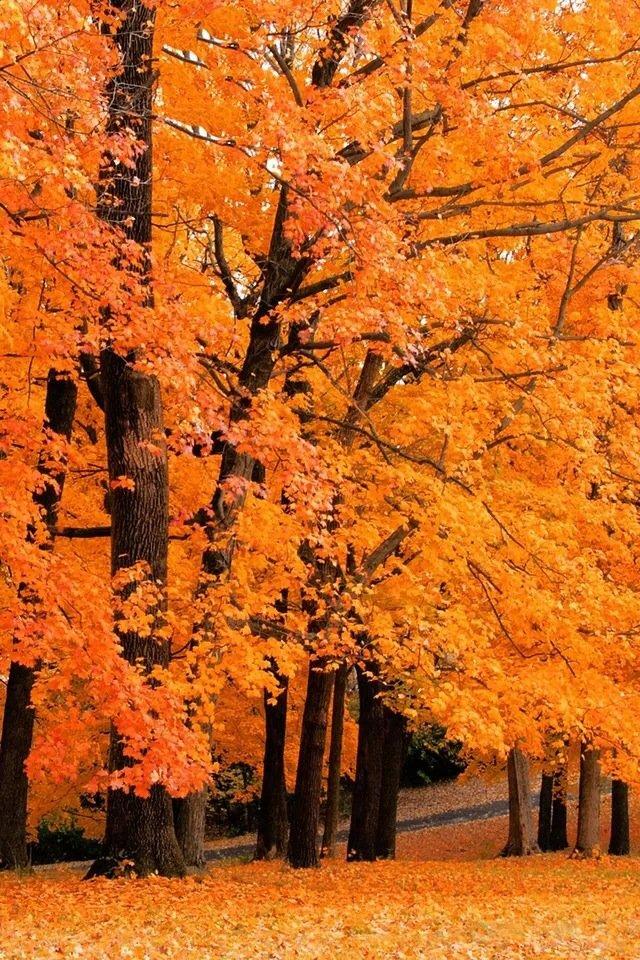 iphone4风景橙色壁纸_iphone4风景橙色壁纸下载