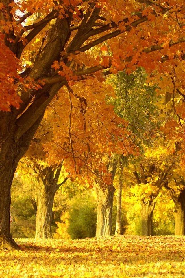 iphone4风景棕色壁纸_iphone4风景棕色壁纸下载