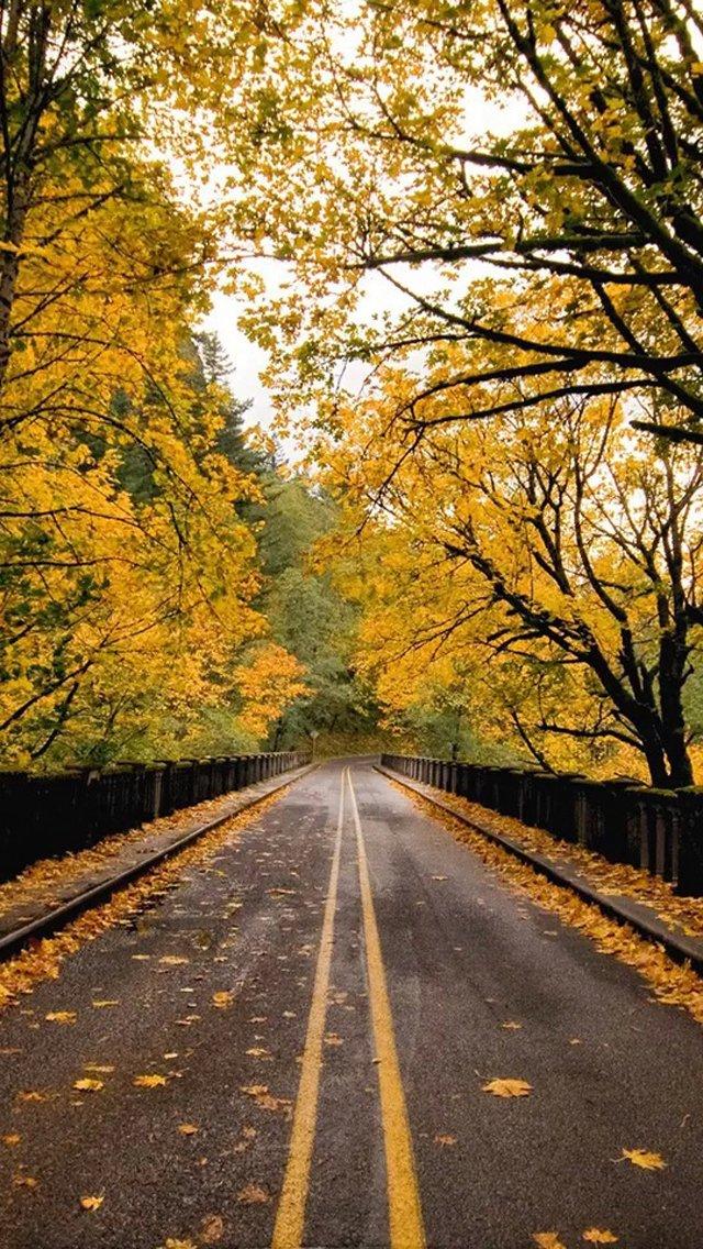 壁纸 风景 森林 桌面 640_1136 竖版 竖屏 手机