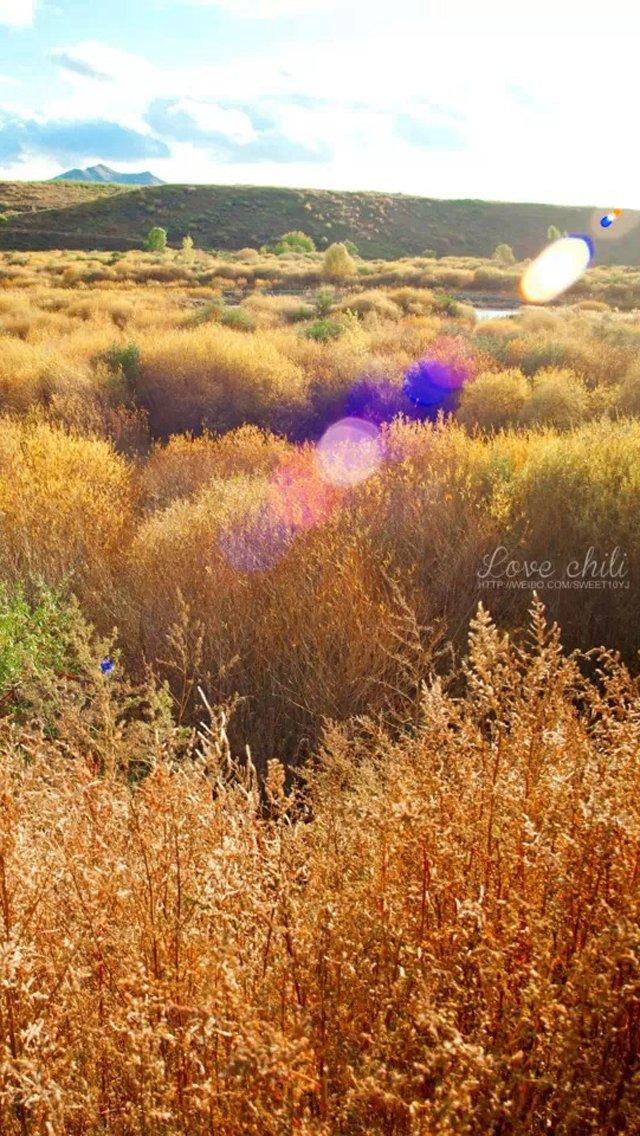 iphone5风景棕色壁纸_iphone5风景棕色壁纸下载