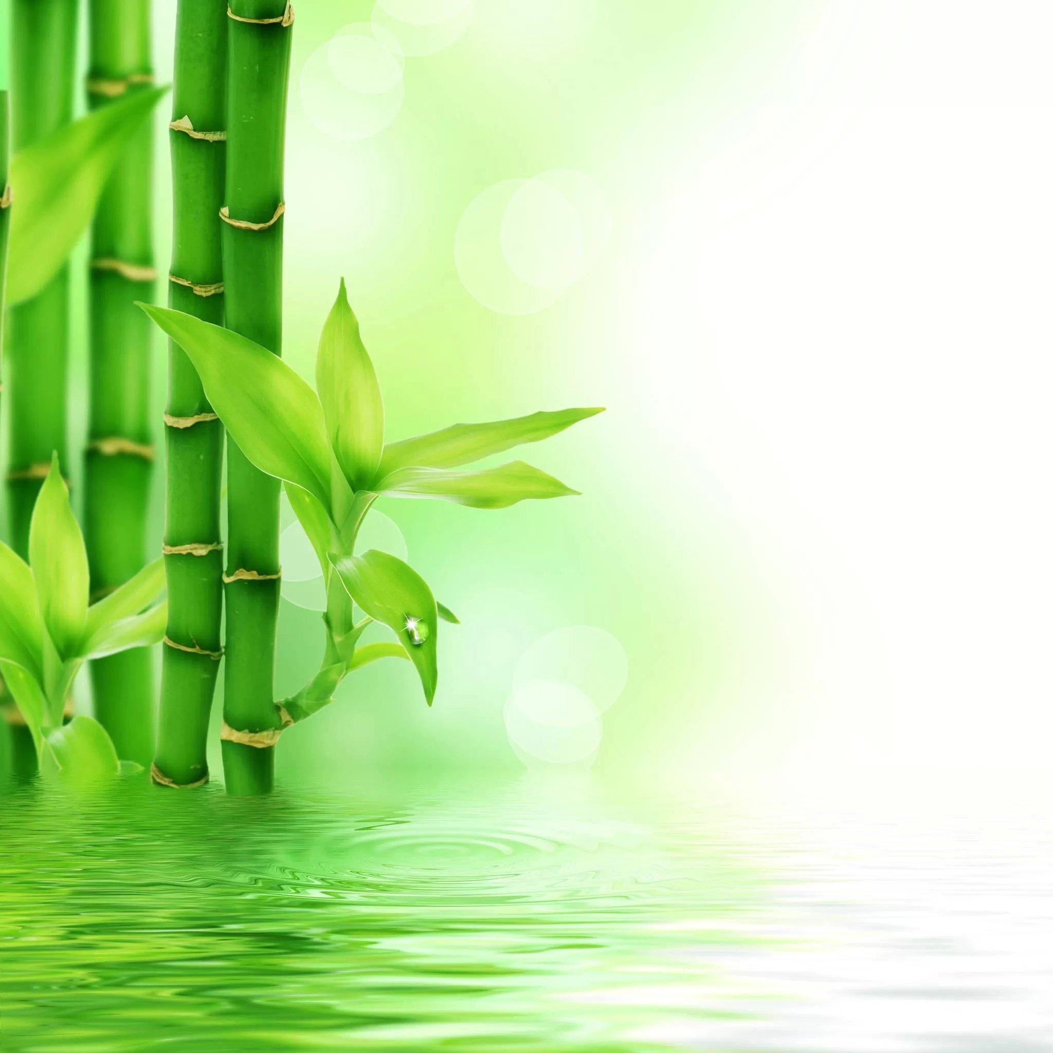 ipad风景绿色壁纸_ipad风景绿色壁纸下载