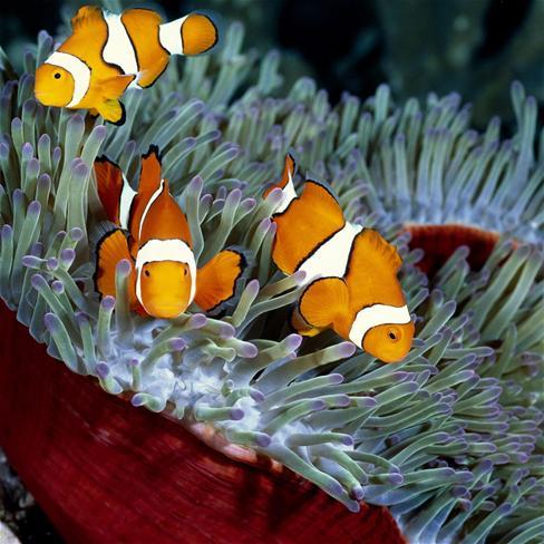 超可爱鱼萌宠图片
