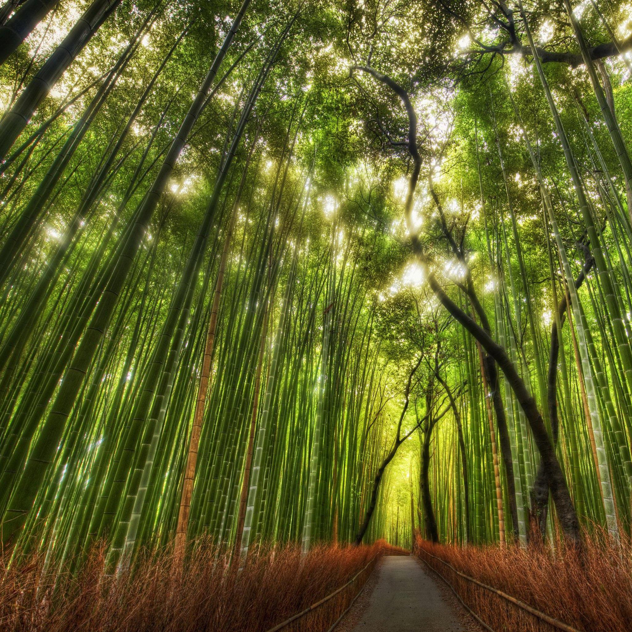 壁纸 风景 森林 植物 桌面 2048_2048