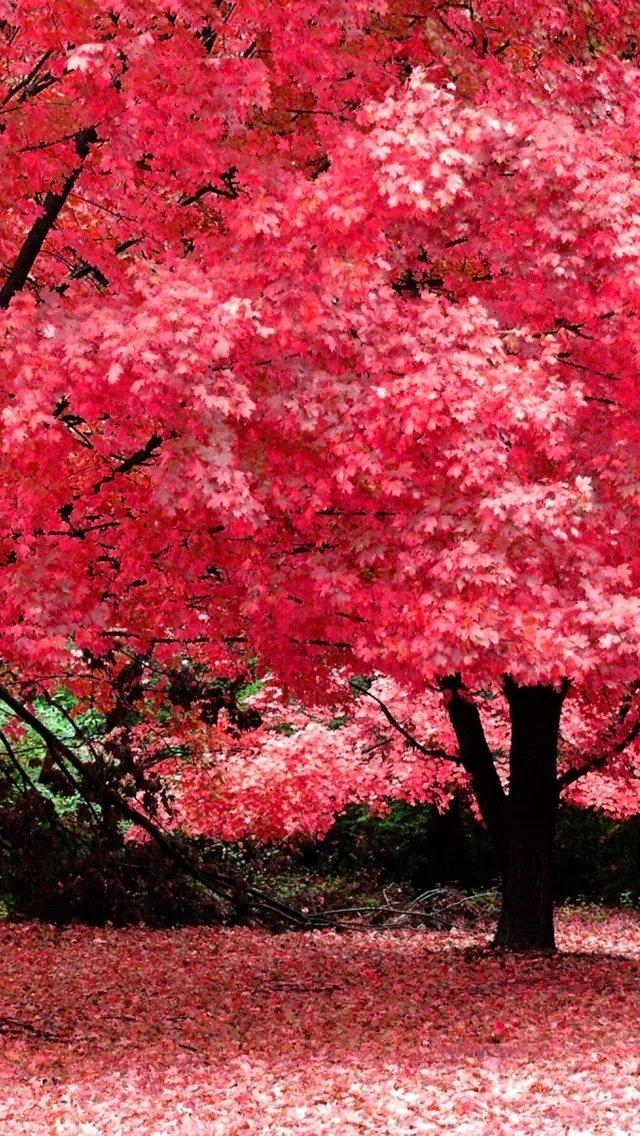 iphone5风景红色壁纸_iphone5风景红色壁纸下载